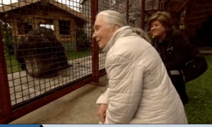 Jane Goodall Video