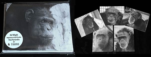 Chimp Portrait Postcards